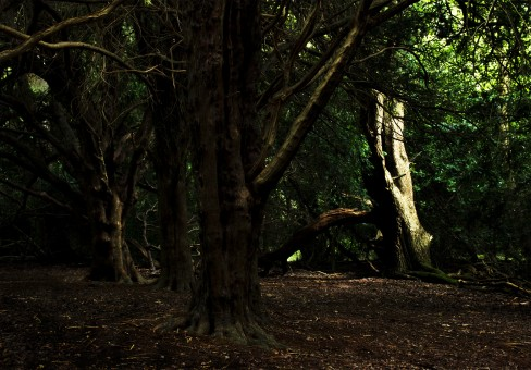 Shadows 1: A real challenge with the contrast for this one and I'd like to go back and re-shoot. There's perhaps too much space between the central yew tree and the brightly lit beech.
