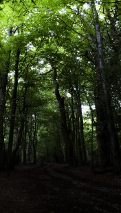Shadows 5: The beech woods have a completely different feel to the groves where the yew trees grow. I like the way the canopy is a bright friendly green whilst at ground level it's all shadowy and slightly intimidating.