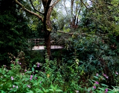 Footbridge at Pixham 2