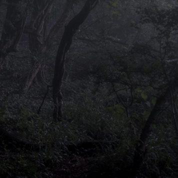 cropped-tangled-woodland-dawn.jpg