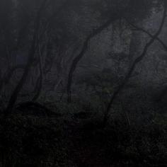 Tangled Woodland - Dawn
